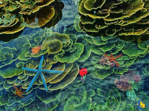 Tour lặn ngắm san hô Cù Lao Xanh Quy Nhơn