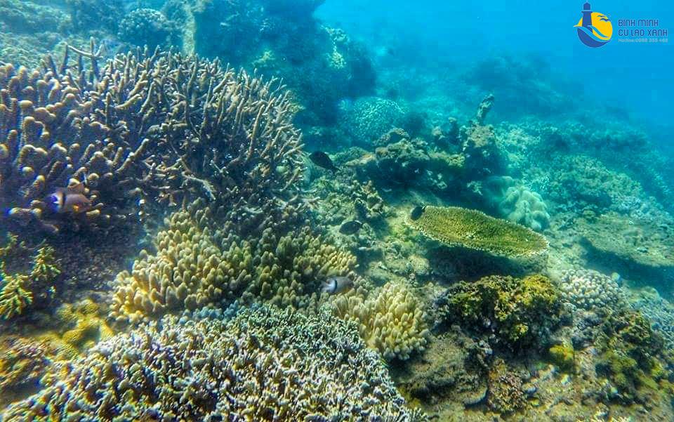 bãi lặn san hô