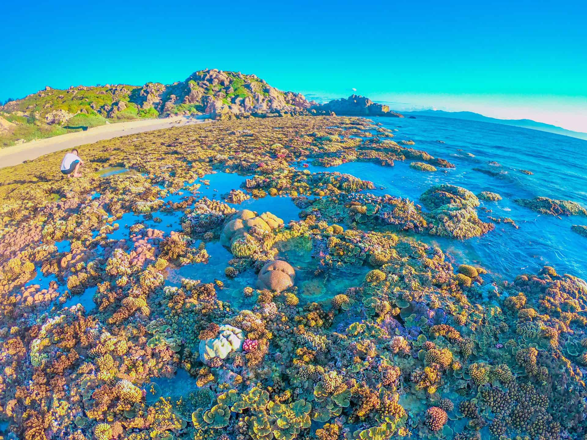 Bình Minh trên bãi san hô - trải nghiệm thú vị cùng Tour Cù Lao Xanh 2N1Đ
