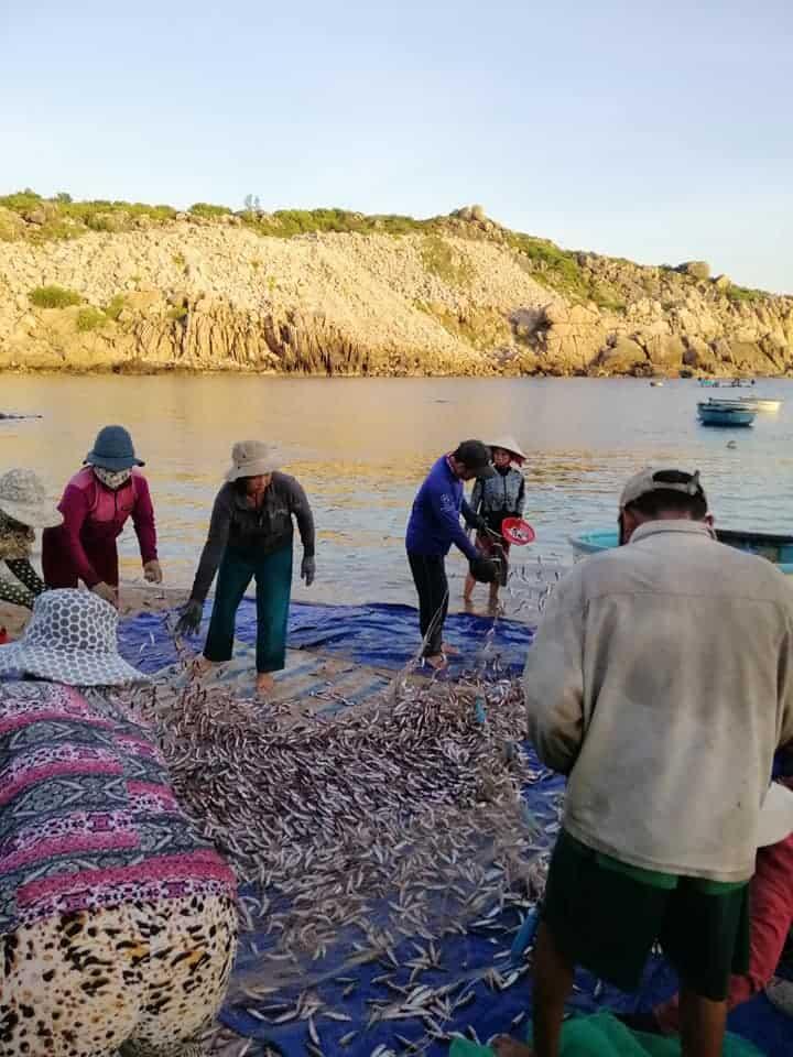Cư dân thu hoạch hải sản