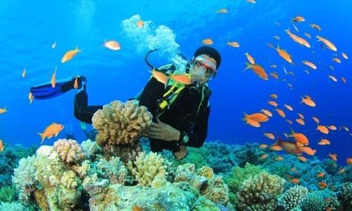 Ngắm san hô Kỳ Co